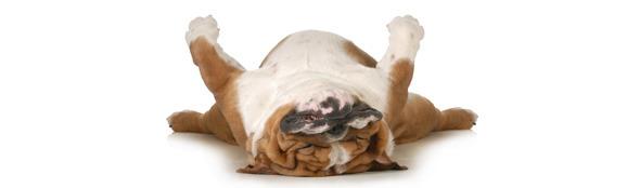 Wat is het effect van uw vaste slaaphouding op uw gezondheid?