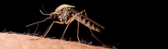 Bestaan er matrasbeschermers tegen muggen?